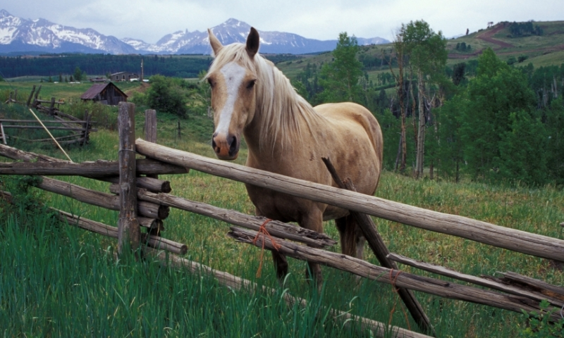 Horse in San Juan Mountains