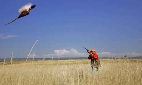 Telluride Hunting