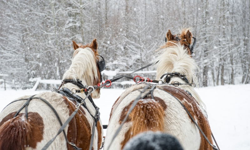 Telluride Colorado Sleigh Rides